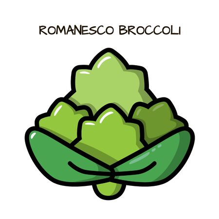 Icon romanesco broccoli on a white background. Illustration with the vegetables for design food products, advertising products, environmental articles, dietary recommendations.