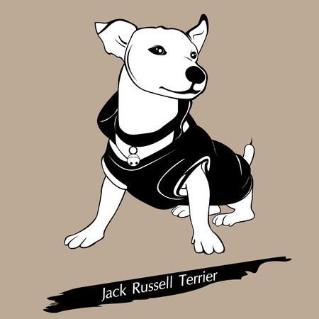 jack terrier: The frisky dog is sitting on the floor. With the brown background. Illustration