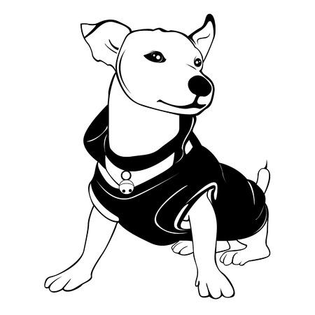 Weißer Hund wird das schwarze Hemd trägt. Er sitzt und lächelnd.