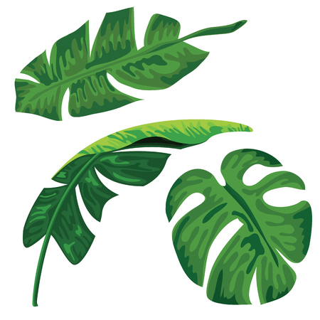 Palm tropical leaves set on white background. Banana leave and palm leave collection design.
