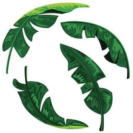 Banana leaves collection set design isolated on white background. Ilustrace