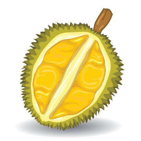 Durian fruit on white background.