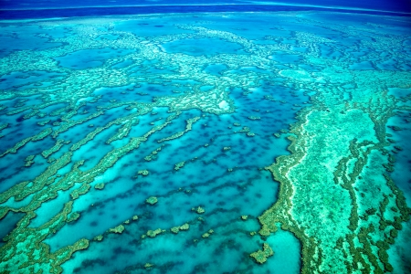 hardy: Great Barrier Reef Coral Reef Stock Photo