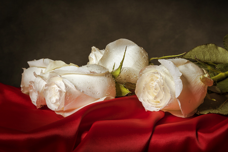 fervour: White roses on red satin against a dark background. Toned photo.