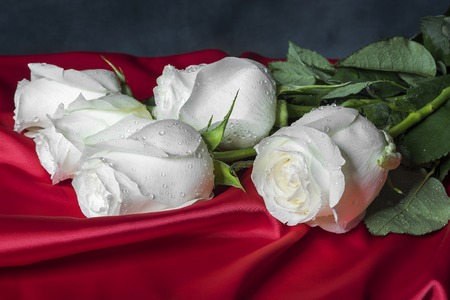 love blast: White roses on red satin against a dark background.