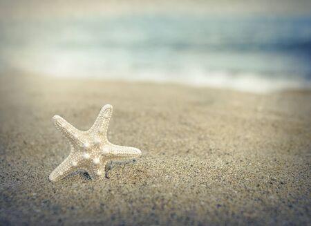 warm water fish: Starfish on the beach under the sunlight. Toned photo.