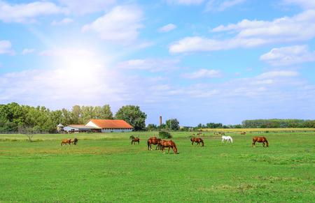 Horses on the farm.
