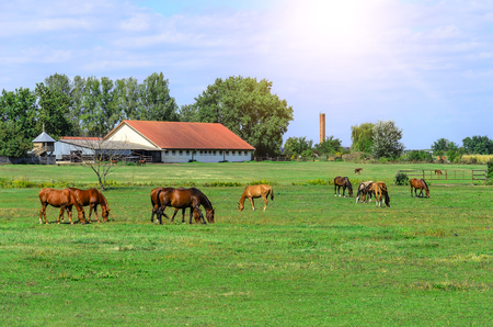 Horses on the farm.