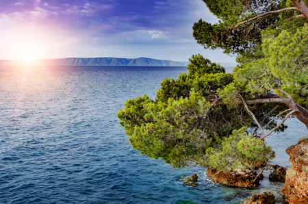 Beautiful pine trees and the shore of the blue sea in the evening. Croatia. Stock Photo - 115231155