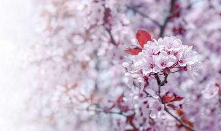 Bloemen in de bomen.