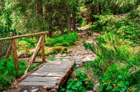 Wooden bridge over a stream in the forest. Фото со стока - 130561056