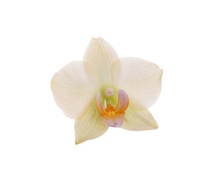 An orchid flower on a white background.