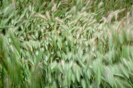 A beautiful grass on the full image close-up Stock Photo