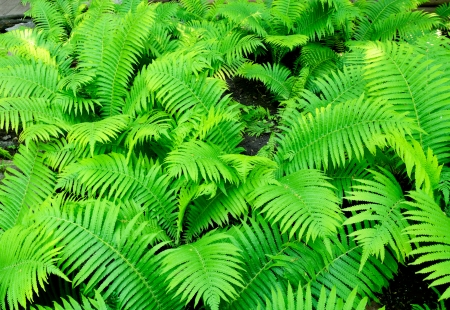 A fern on a full background  photo