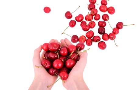 Sweet cherries in the hands of european girls. Sweet cherries is scattered on the table. Isolated on white.