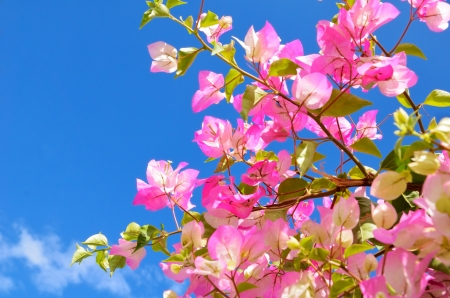 pink flowers and blue sky. bright image tender flowers on sky background