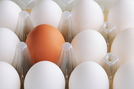 white and one brown eggs in tray horizontal on the full backgrpound close-up photo