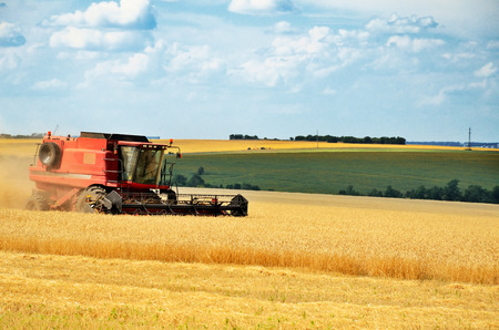 red combine harvests wheat in a field, horizontal