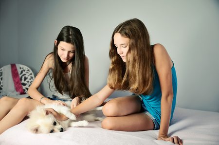 two animals: two teen girls stroking pomeranian. horizontal format
