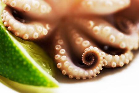 tentacles of an octopus and a slice of lime close-up on a white background, horizontal Stock Photo