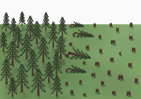 Cutting down of a pine forest landscape, big trees and a lot of stumps, vector illustration horizontal