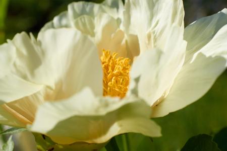 Große Blume Mit Weißen Blütenblättern Und Einem Gelben Zentrum ...