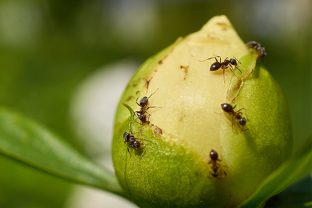 a few ants crawling on the Bud of the white flower