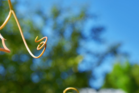long spiral from young they escape grapes Stock Photo