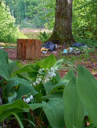 lilies of the valley bloom in the forest next to a pile of garbage Stok Fotoğraf