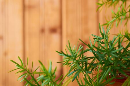frame of green leaves of a houseplant on a wooden background Stok Fotoğraf - 125432111