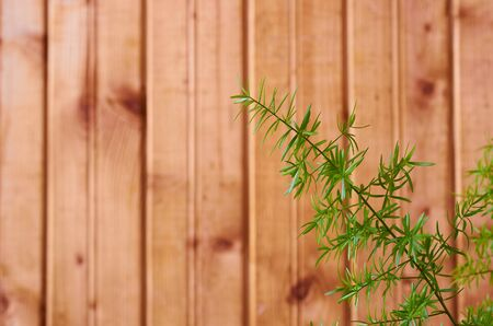 green leaves of a houseplant on a wooden background