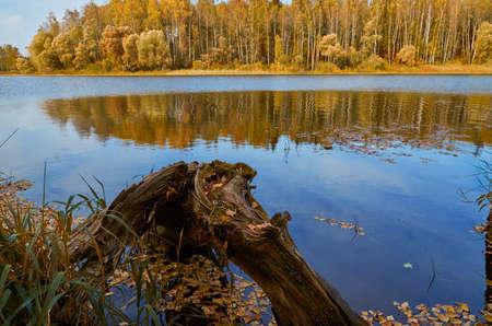 Autumn landscape. An old broken tree on the lake shore. Sunny autumn day