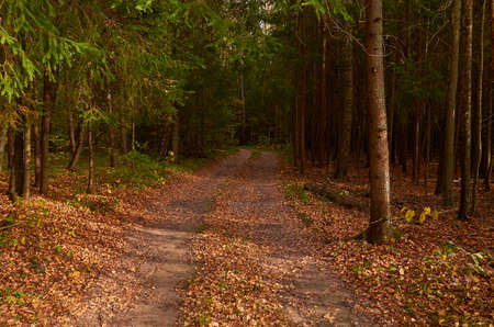 Autumn landscape. Road in the forest, strewn with fallen leaves. Sunny autumn day