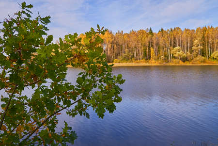 Autumn landscape. Oak branches with green leaves on the background of the lake. Sunny autumn day Stok Fotoğraf