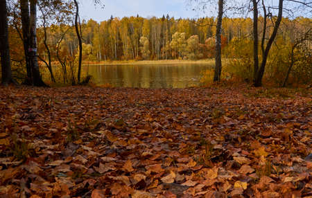 Autumn landscape. Lake shore with fallen leaves on the grass. Sunny autumn day