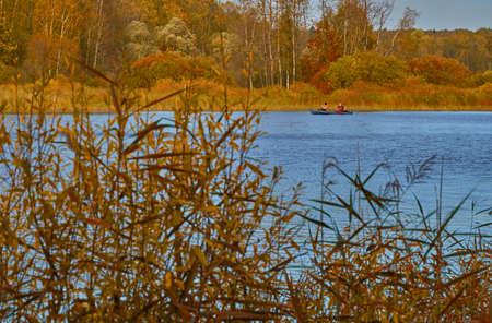 Autumn landscape. Tall yellow grass on the lake shore. Sunny autumn day