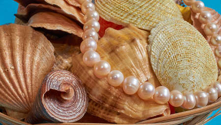 Many different shells and pearl beads in a basket on blue Stok Fotoğraf