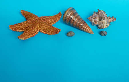 Marine layout. Starfish and four shells on a blue background. Space for text