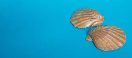 Marine layout. Two large shiny shells on a blue background. Space for text. Banner