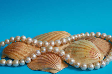 Seashells and pearl beads on  blue