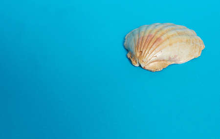 One big shiny shell on a blue background. Space for text Stok Fotoğraf