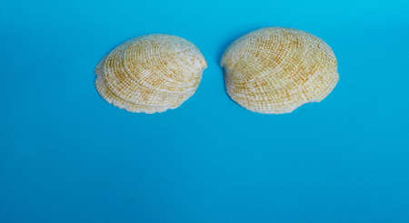 Marine layout. Two large shiny shells on a blue background. Space for text Stok Fotoğraf