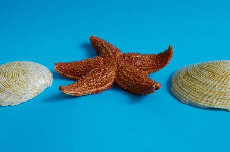 Marine layout. Two seashells and a starfish on a blue background. Space for text