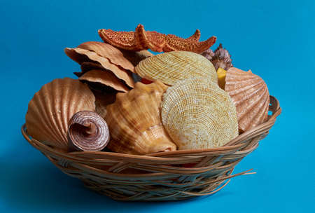 Many different shells in a basket on a blue background. Space for text Stok Fotoğraf