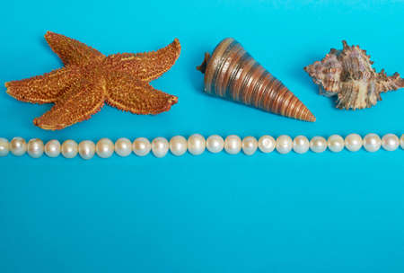 Marine layout. Starfish, two shells and pearl beads on a blue background. Space for text