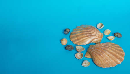 Marine layout. Two large shiny shells and many small shells on a blue background. Space for text Stok Fotoğraf