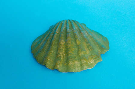 A large shell painted green on a blue background. Space for text