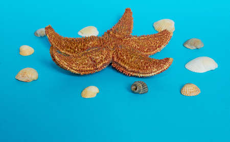 Marine layout. Starfish and many small shells on a blue background. Close up Stok Fotoğraf