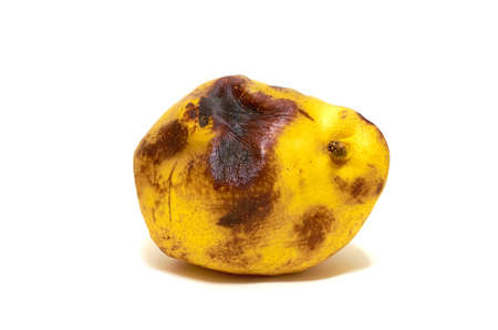 Rotten yellow pear isolated on a white background, close-up