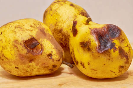Three spoiled yellow pears lie on the wooden surface. Close up